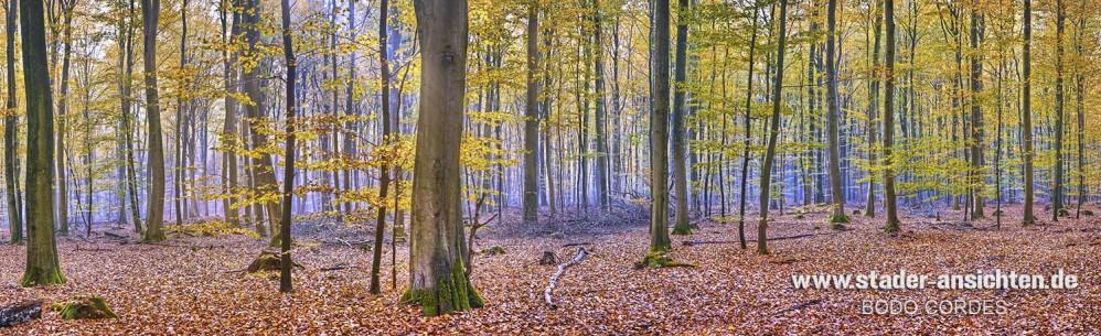 Rüstjer Forst