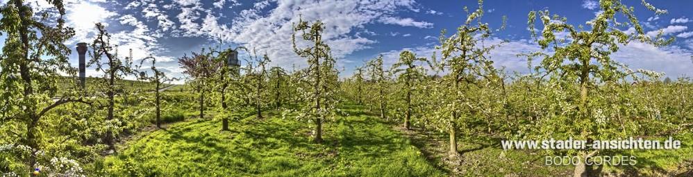 Obsthof im Alten Land